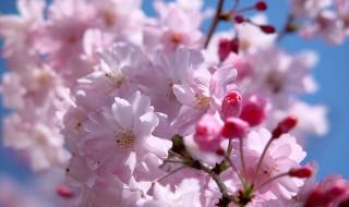 恋桜前線通過中!『お花見』で一花咲かせるファッション、小技を紹介します!